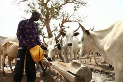 FG consents to ranching to end herders, farmers clashes